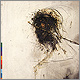 Peter Gabriel - Passion: The Last Temptation Of Christ - CD Rezension